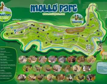 mollo-parc-animals-vall-de-camprodon